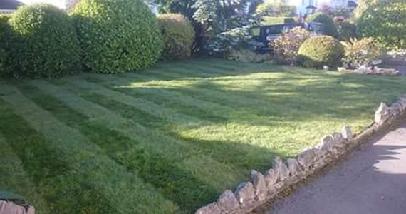DP Weed control lawn treatment